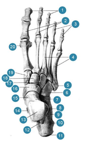 Phasange liigeste artriit