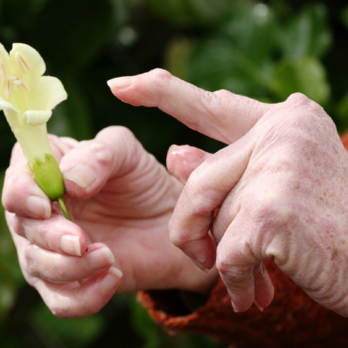 Retseptid artroosi raviks Zozhis
