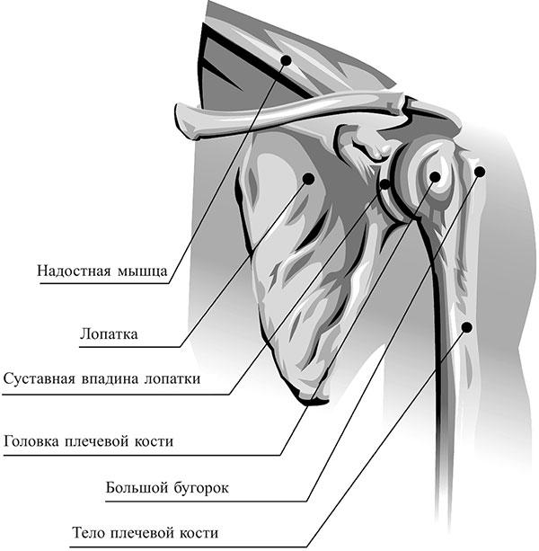 Haiguste haigused olal Anesteesia liigeste poletik