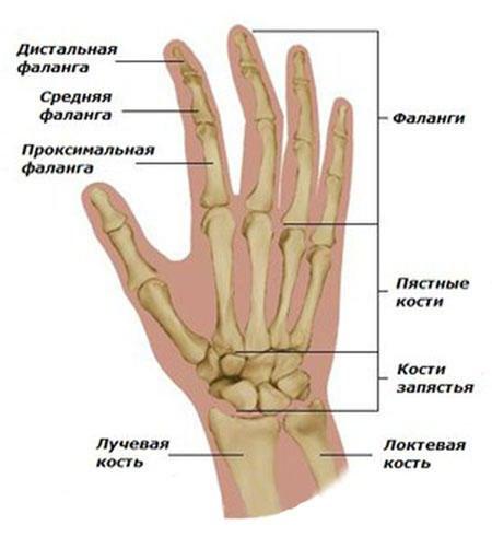 Haigus liigeste sormede kate parast vigastusi haiget kaed sorme
