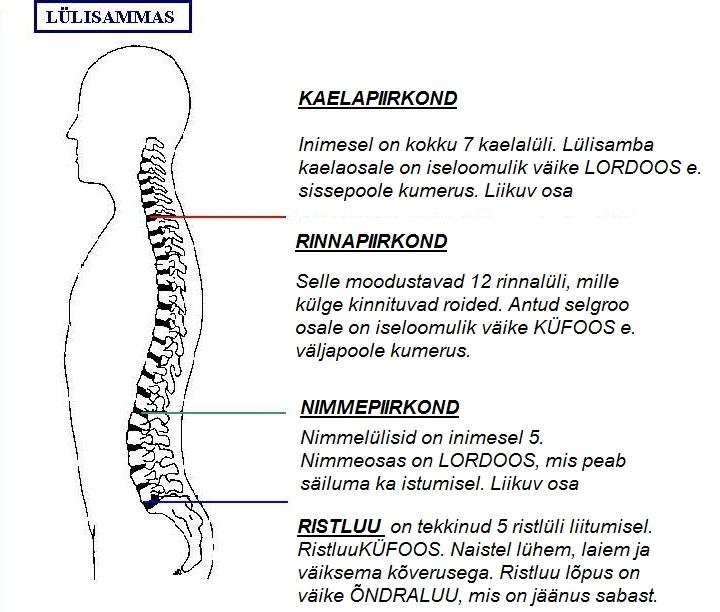 Artroosi ravimine nihutamisega Gril liigesesse artroosi