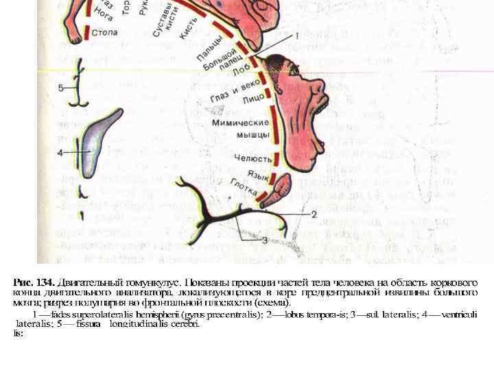 Ekslemine valu liigestega Mida teha liigestega, kui nad haiget teevad