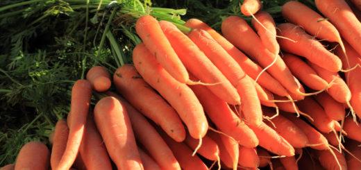 Vitamiinide puhul Liigeste turse veiste