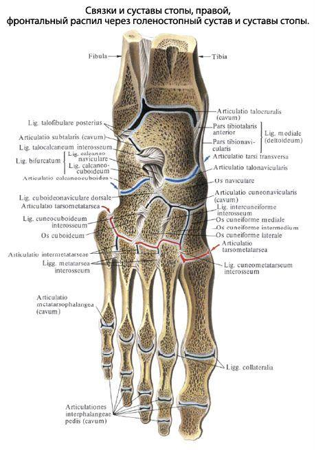 Mida teha, kui liigend on jalgsi haiget teinud Pansion liigeste tootlemisega