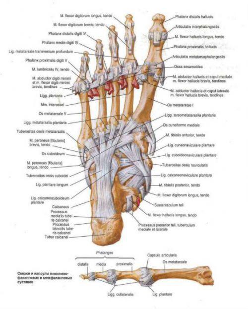 Laseriga liigeste ravi Artrosi haiguse ravi
