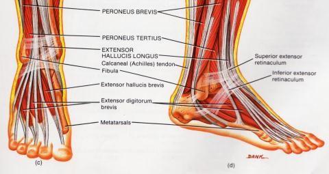 Tugev valu jala liigestes, mida teha