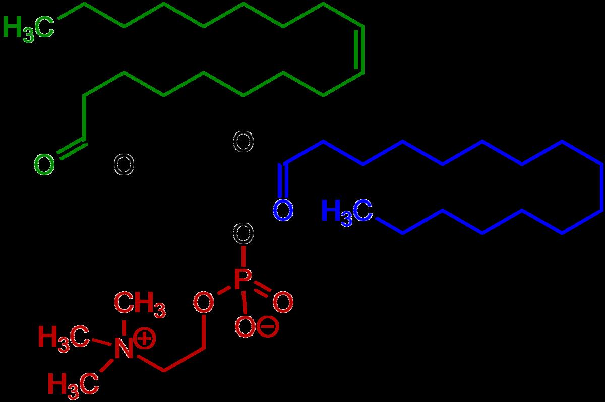 Glukoosamiini Chondroitiin Wiki. Olaliigendi pea poletik