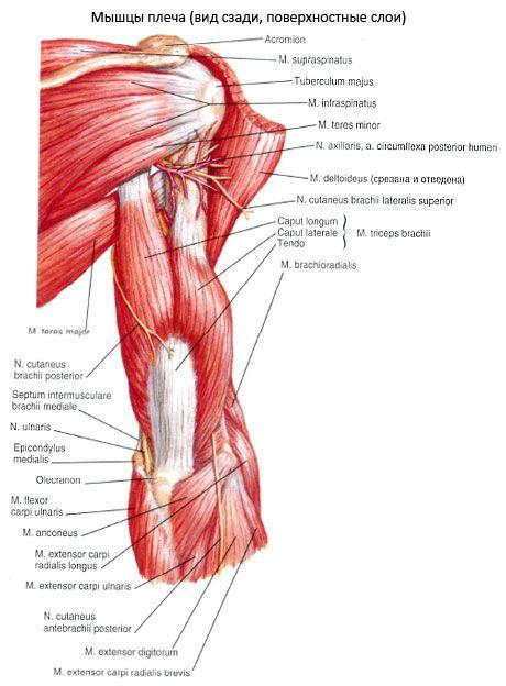 Haiget kuunarnuki lihaste lihastele