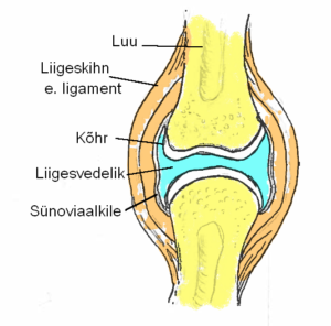 Valu liigesed kuunarvarre
