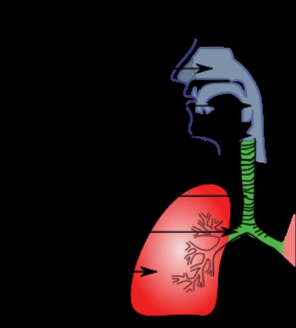 SUHTES SOOVITAMINE Infektsiooni tottu Programmi elu ilma liigesevaluta
