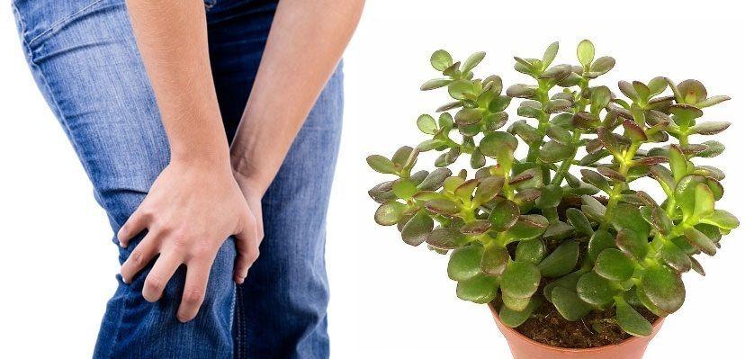 Kate liigeste ja sidemete haigused Sailitada turse jalgu