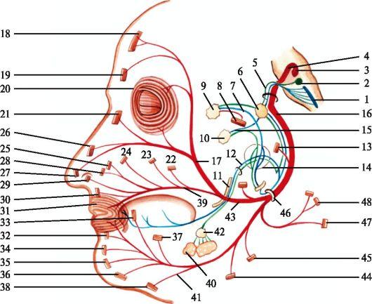 Fir Bumpsi liigeste ravi Ravi kate liigeste poluartiidiga