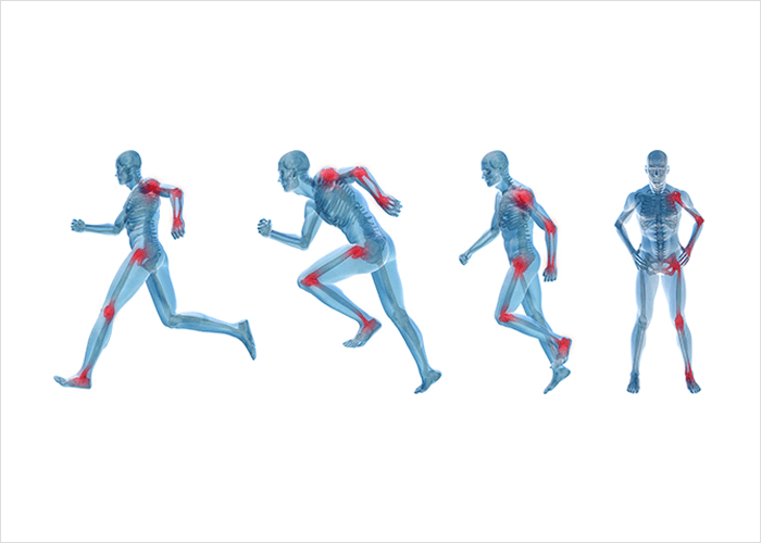 Lihashaiguste luud ja liigesed