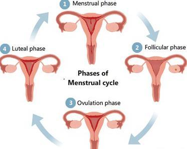 Parast emaka ja munasarjade eemaldamist kahjustavad liigeseid Kuidas ja milline on liigeste valu ravida
