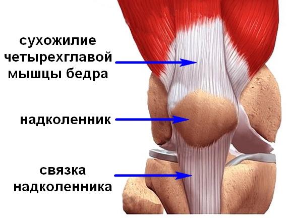 valutab liigese parast vigastust Salvi liigend